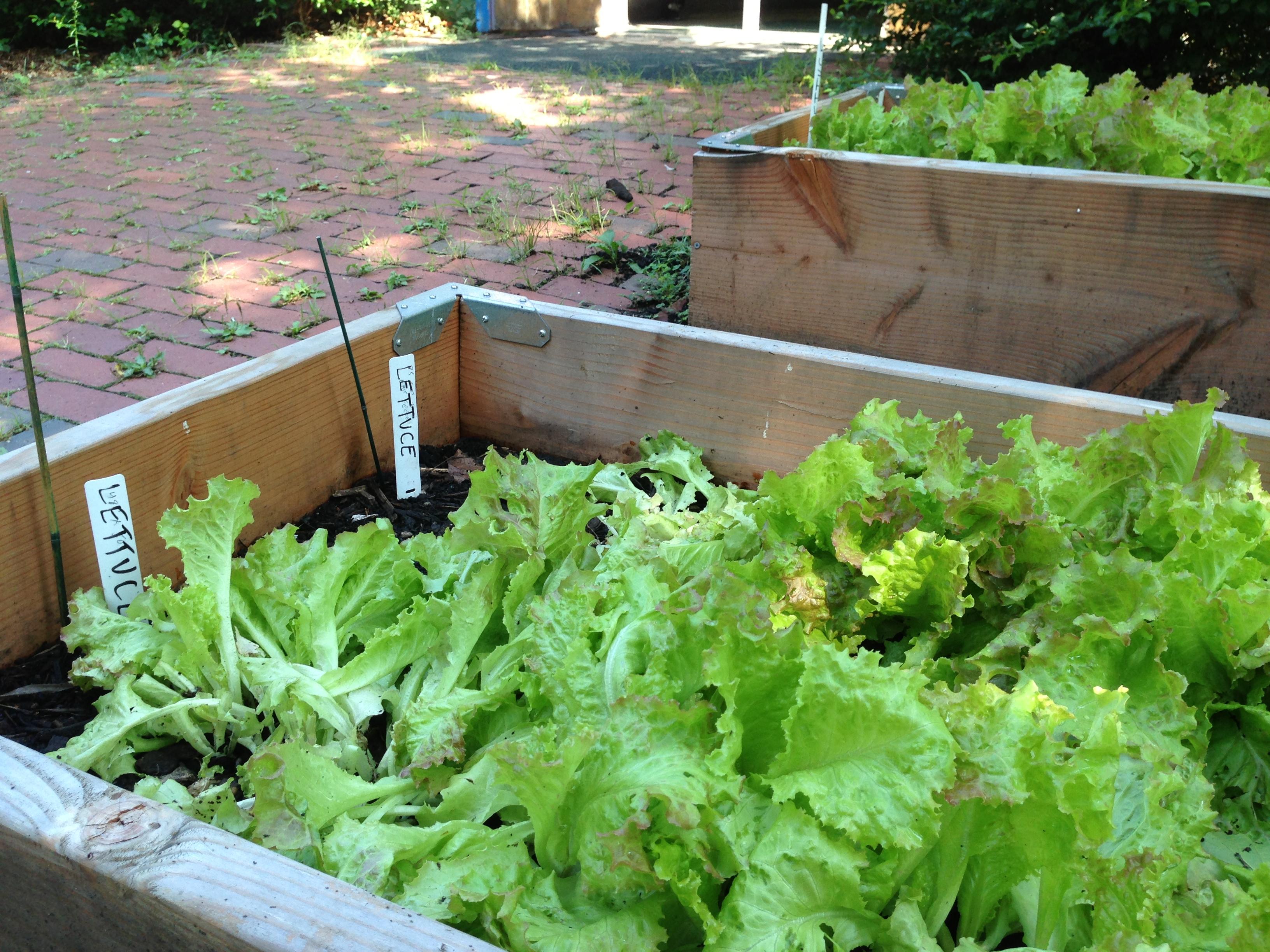 Urban Agriculture Haley House