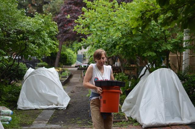 Carmine in the Garden
